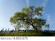 Дерево. Стоковое фото, фотограф Пакалин Сергей / Фотобанк Лори