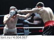 Купить «Боксёрский турнир ТАФФАЙТ», эксклюзивное фото № 4004067, снято 15 октября 2012 г. (c) Дмитрий Неумоин / Фотобанк Лори