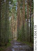Купить «Лесная дорога в хвойном лесу весной», фото № 4004179, снято 1 мая 2012 г. (c) Ольга Денисова / Фотобанк Лори
