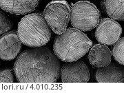Дрова, сложенные в поленницу. Стоковое фото, фотограф Константин Скуридин / Фотобанк Лори