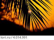 Тропический закат. Стоковое фото, фотограф Филипп Чистяков / Фотобанк Лори