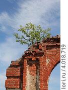 Дерево на разрушенной кирпичной стене на фоне неба - сила жизни. Стоковое фото, фотограф Алексеева Оксана / Фотобанк Лори
