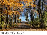 Осенний пейзаж - дорожка в осеннем парке. Стоковое фото, фотограф Алексеева Оксана / Фотобанк Лори