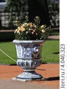 Вазон с цветами в Летнем саду, Санкт-Петербург (2012 год). Редакционное фото, фотограф Андрей Мсхалая / Фотобанк Лори