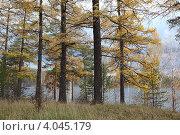 Купить «Осенняя тайга», фото № 4045179, снято 7 октября 2012 г. (c) Виталий Горелов / Фотобанк Лори
