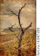 Сухое дерево на фоне осеннего леса. Стоковое фото, фотограф Анастасия Филиппова / Фотобанк Лори