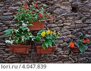 Цветочная композиция на фоне каменной стены. Стоковое фото, фотограф Екатерина Рыжова / Фотобанк Лори