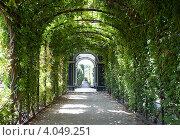 Купить «Пергола в парке дворца Шенбрунн в Вене», фото № 4049251, снято 15 августа 2012 г. (c) Наталья Волкова / Фотобанк Лори