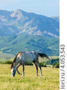 Одинокая лошадь на лугу, фото № 4053543, снято 26 августа 2012 г. (c) Elnur / Фотобанк Лори