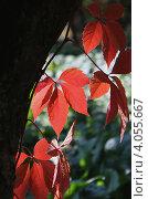 Осень. Стоковое фото, фотограф Котылко Марина / Фотобанк Лори