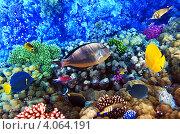 Купить «Кораллы и рыбы в Красном море. Египет, Африка.», фото № 4064191, снято 8 сентября 2012 г. (c) Vitas / Фотобанк Лори