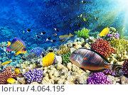 Купить «Разноцветные рыбы и кораллы в Красном море. Египет, Африка», фото № 4064195, снято 8 сентября 2012 г. (c) Vitas / Фотобанк Лори