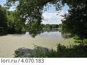 Купить «Летний пейзаж, пруд, заросший ряской», эксклюзивное фото № 4070183, снято 25 июня 2012 г. (c) lana1501 / Фотобанк Лори
