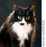 Купить «Кот», эксклюзивное фото № 4070531, снято 2 декабря 2012 г. (c) Куликова Вероника / Фотобанк Лори