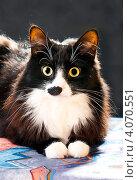 Купить «Удивленный кот», эксклюзивное фото № 4070551, снято 2 декабря 2012 г. (c) Куликова Вероника / Фотобанк Лори