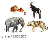 Животные (Акварельный рисунок) Стоковая иллюстрация, иллюстратор Ковалева Наталья / Фотобанк Лори