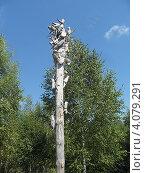 Жуки на стволе (2012 год). Редакционное фото, фотограф Дмитрий Фадеев / Фотобанк Лори