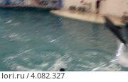 """Купить «Пара дельфинов выпрыгивает из воды. Дельфинарий """"Троя"""". Турция. Белек.», эксклюзивный видеоролик № 4082327, снято 3 декабря 2012 г. (c) Юлия Машкова / Фотобанк Лори"""