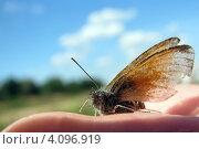 Купить «Бабочка на руке», фото № 4096919, снято 5 августа 2012 г. (c) Алексей Гунев / Фотобанк Лори