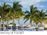 Купить «Летний тропический пейзаж с пальмами под голубым небом», фото № 4113567, снято 17 января 2010 г. (c) Syda Productions / Фотобанк Лори
