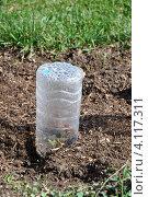 Купить «Мини-парник из пластиковой бутылки», фото № 4117311, снято 1 октября 2012 г. (c) Анна Мартынова / Фотобанк Лори