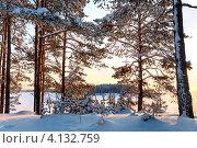 Купить «Зимний закат на берегу озера через растущие на берегу сосны. Карелия», фото № 4132759, снято 8 января 2010 г. (c) Кекяляйнен Андрей / Фотобанк Лори