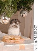 Котёнок. Стоковое фото, фотограф Конушкина Екатерина / Фотобанк Лори