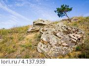 Купить «Каменные глыбы и одинокая сосна на склоне холма», фото № 4137939, снято 31 августа 2012 г. (c) Борис Панасюк / Фотобанк Лори