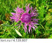 Цветок. Стоковое фото, фотограф Виктор Мандриков / Фотобанк Лори