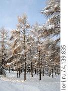 Зимний парк (2012 год). Стоковое фото, фотограф Юлия Желтенко / Фотобанк Лори