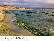 Купить «Цветение воды Цимлянского водохранилища», фото № 4146855, снято 20 октября 2012 г. (c) Борис Панасюк / Фотобанк Лори