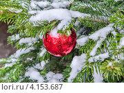 Купить «Красный елочный шар на заснеженной еловой ветке», фото № 4153687, снято 26 декабря 2012 г. (c) Владимир Сергеев / Фотобанк Лори