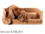 Собака со щенком. Стоковое фото, фотограф Ирина Подгорных / Фотобанк Лори