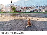 Мир глазами кошки (2009 год). Редакционное фото, фотограф Григорий Барам / Фотобанк Лори