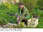 Купить «Женщина ухаживает за растениями в саду», фото № 4190559, снято 29 сентября 2012 г. (c) Леонид Штандель / Фотобанк Лори