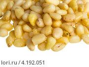 Купить «Кедровые орешки на белом фоне», фото № 4192051, снято 20 декабря 2012 г. (c) Андрей Старостин / Фотобанк Лори