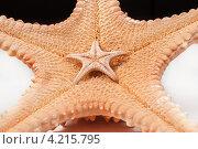 Две морские звезды - маленькая на большой. Стоковое фото, фотограф Сергей Лукин / Фотобанк Лори