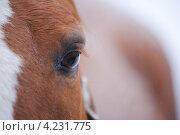 Глаз лошади крупным планом. Стоковое фото, фотограф Артём Сапегин / Фотобанк Лори