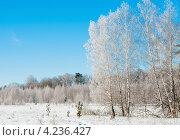 Купить «Зимний лес. Берёзы покрытые инеем на фоне голубого неба», эксклюзивное фото № 4236427, снято 26 января 2013 г. (c) Игорь Низов / Фотобанк Лори