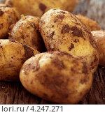 Купить «Неочищенный картофель крупным планом», фото № 4247271, снято 16 января 2019 г. (c) Food And Drink Photos / Фотобанк Лори