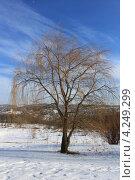 Одинокое дерево. Стоковое фото, фотограф Диана Линевская / Фотобанк Лори