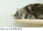 Купить «Серый кот спит дома у батареи», фото № 4249503, снято 31 декабря 2012 г. (c) Сурикова Ирина / Фотобанк Лори