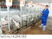 Купить «Ветеринар делает записи после осмотра свиней на свиноферме», фото № 4254163, снято 30 августа 2012 г. (c) Дмитрий Калиновский / Фотобанк Лори