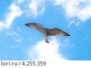 Полет чайки. Стоковое фото, фотограф Константин Блохин / Фотобанк Лори