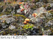 Маленькие грибы и мох в лесу. Стоковое фото, фотограф Наталия Давидович / Фотобанк Лори