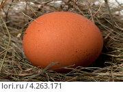 Купить «Коричневое яйцо», фото № 4263171, снято 10 февраля 2012 г. (c) Анна Полторацкая / Фотобанк Лори