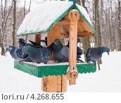 Купить «Голуби на кормушке в городском парке», эксклюзивное фото № 4268655, снято 21 января 2013 г. (c) Игорь Низов / Фотобанк Лори