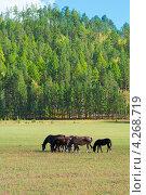 Табун лошадей. Стоковое фото, фотограф Александр Подшивалов / Фотобанк Лори