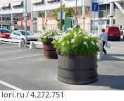 Купить «Цветы (космея) в кадках на улице. Стокгольм», эксклюзивное фото № 4272751, снято 10 августа 2012 г. (c) Александр Щепин / Фотобанк Лори