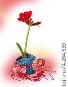 Купить «Красный гиппеаструм», фото № 4284639, снято 1 февраля 2013 г. (c) Олеся Сарычева / Фотобанк Лори